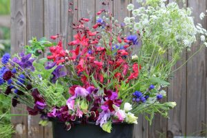Buckets of flowers, sustainable flowers, eco-flowers, DIY flowers, flower arrangers flowers