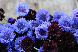 cornflowers, ecoflowers, low carbon flowers, english flowers