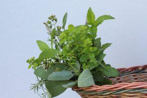 herb posy, Oversley Flowers