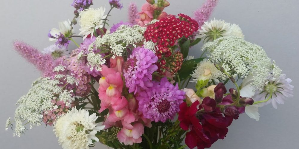 fresh British flowers, snapdragons, scabious, ammi majus