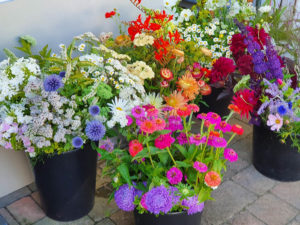 florist's flowers